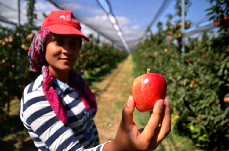 İyi tarım uygulamaları, ihracatımızı kolaylaştırıyor