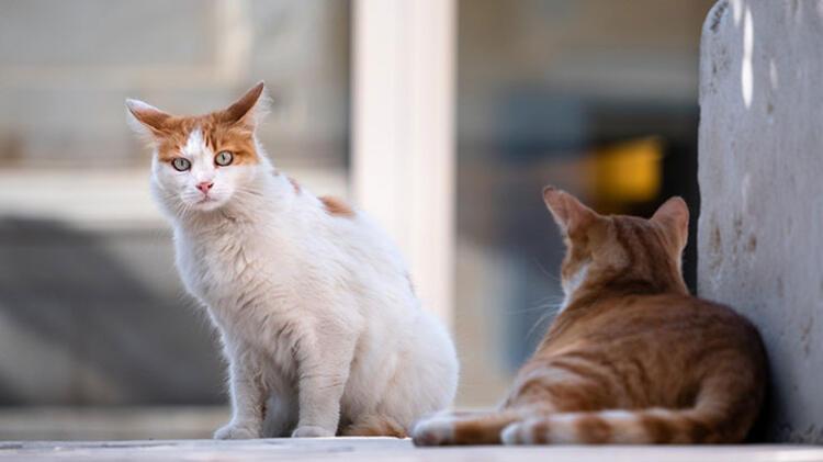 4. Sokak hayvanlarıyla ilgilenin