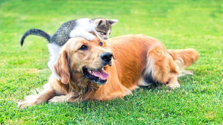 2. Bakamayacağınız hayvanı sahiplenmeyin