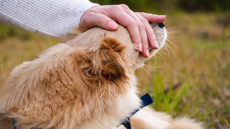 Evdekileri kedi veya köpek sahiplenmeye ikna etmek için onlara sorumluluk alabildiğinizi gösterin