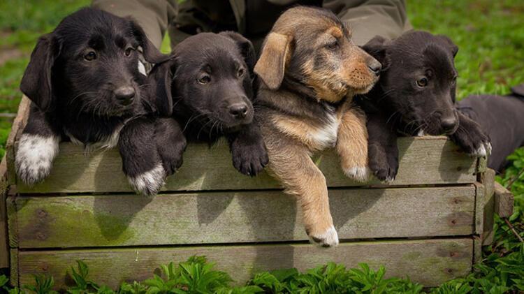 Evinde hayvan besleyen bir arkadaşınız varsa hep birlikte onu ziyarete gidin