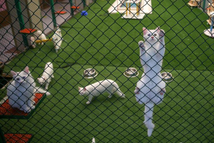 Kediler izole edildi