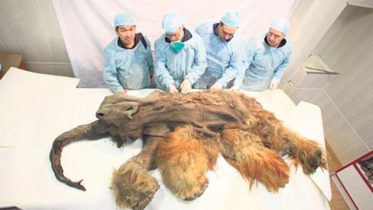 Rusya'da Buzul Çağı'ndan kalma mamut