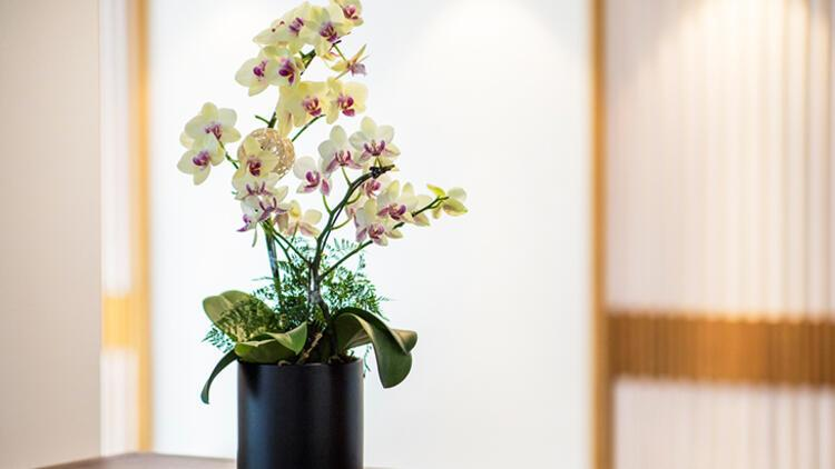 5. Phalaenopsis Orkide