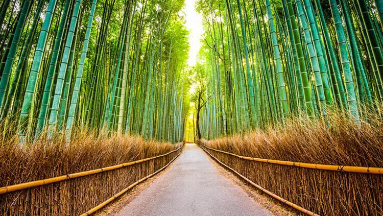 Araşiyama Bambu Korusu, Japonya