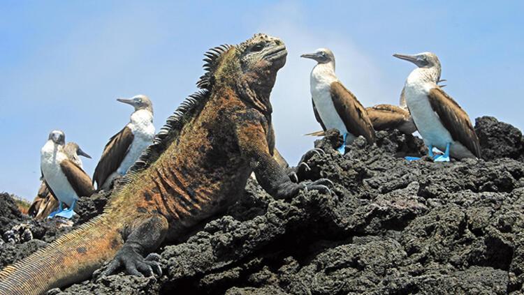 Galapagos Adaları, Ekvator
