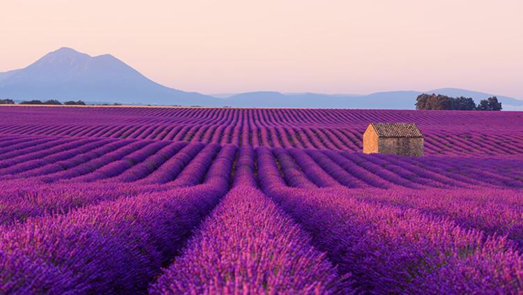 Provence, Fransa