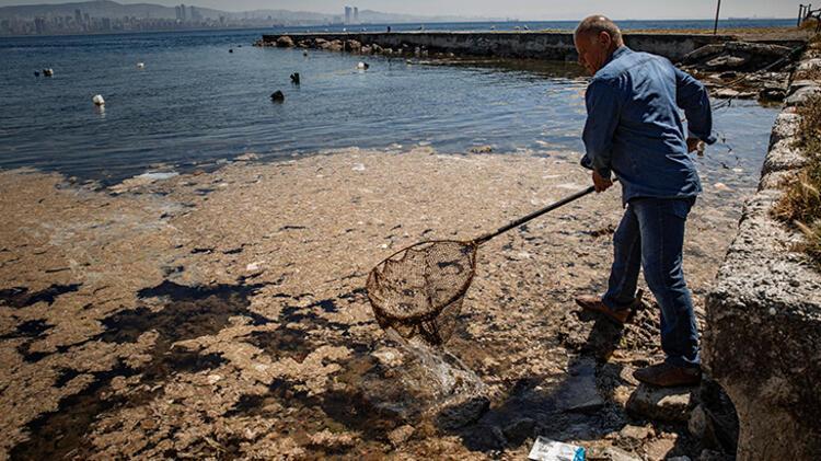 Son dakika... Müsilaj deniz canlıları için tehlike olmaya devam ediyor! Ağ  atılamaz gale geldi - Son Dakika Haberleri Milliyet