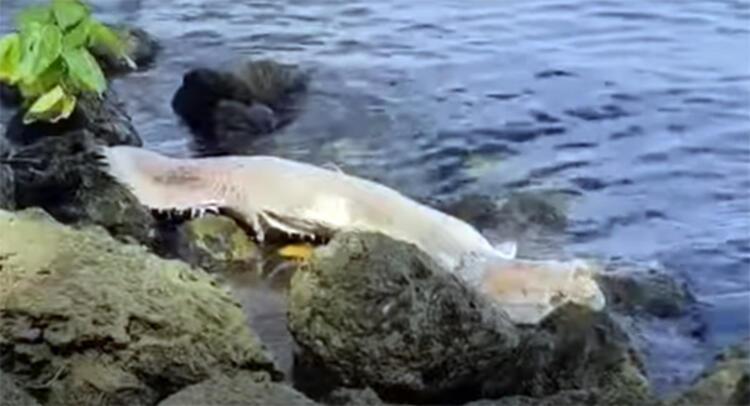 Gizemli balık