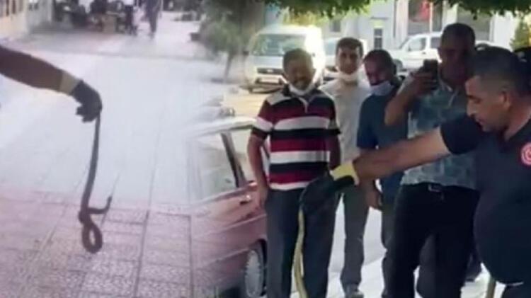 Son dakika haberi... Tunceli'de görüntülendi! Siyah parlak renkli semender... 9 – 60a4dbfa55427f054c8e8cf4