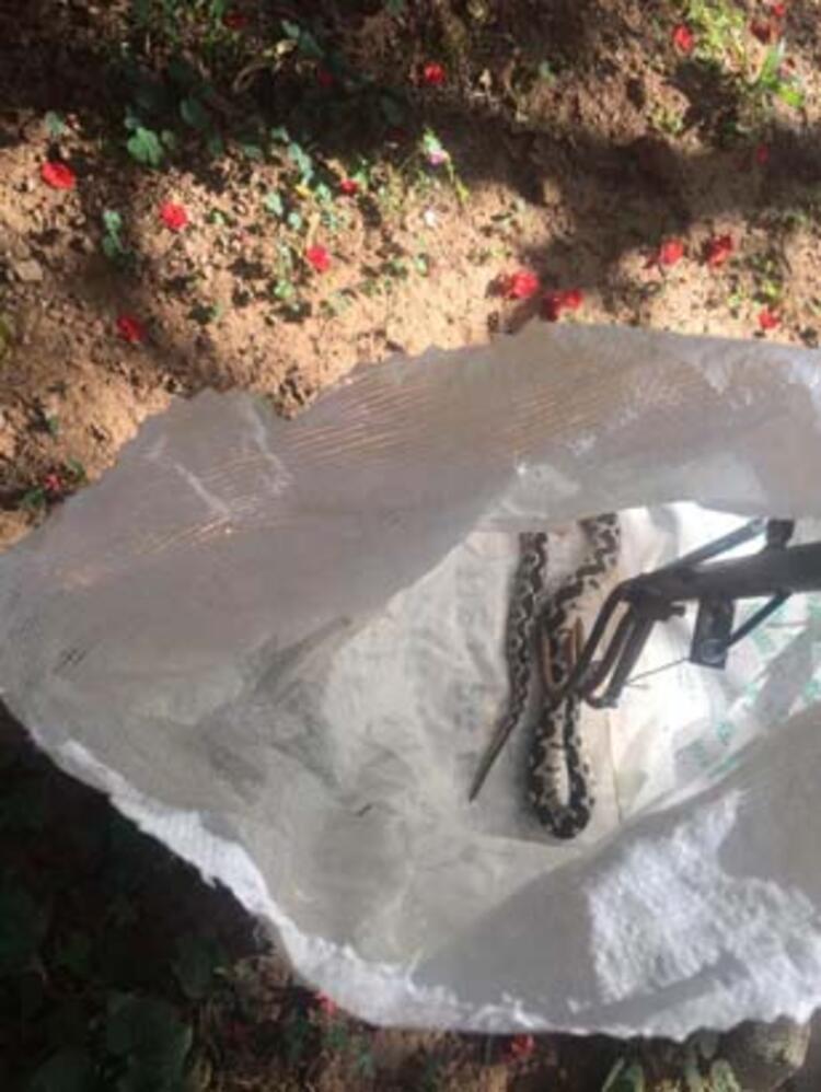 Son dakika haberi... Tunceli'de görüntülendi! Siyah parlak renkli semender... 6 – 60a5feae554284181c04e8d8