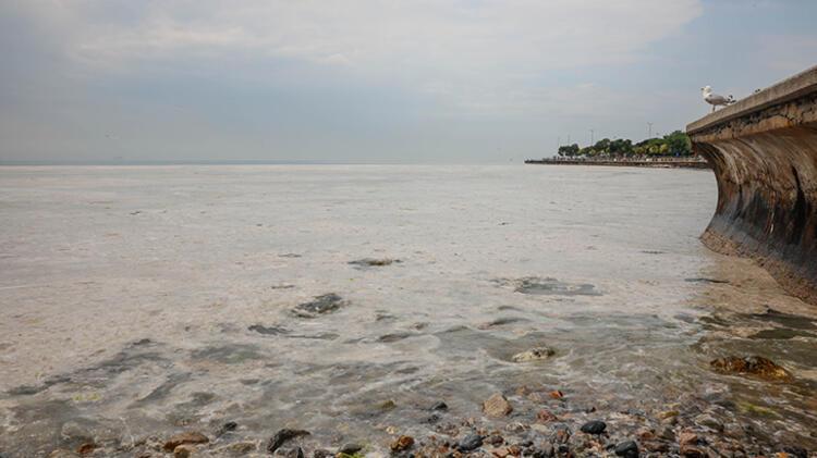 Kadıköy Kurbağlıdere ile sahilleri deniz salyası kapladı; ekipler temizlik çalışması yaptı 5 – 60be24d3adcdeb18b8036cfb