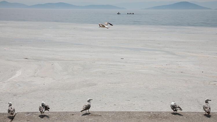 Kadıköy Kurbağlıdere ile sahilleri deniz salyası kapladı; ekipler temizlik çalışması yaptı 7 – 60be24daadcdeb18b8036cfd