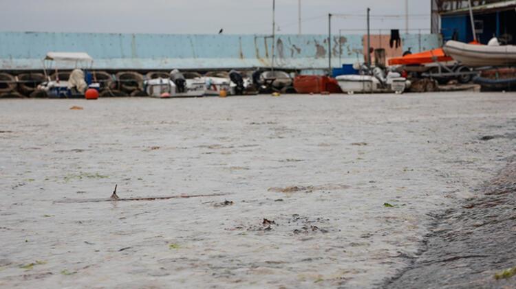 Kadıköy Kurbağlıdere ile sahilleri deniz salyası kapladı; ekipler temizlik çalışması yaptı 1 – 60be24ddadcdeb18b8036cff
