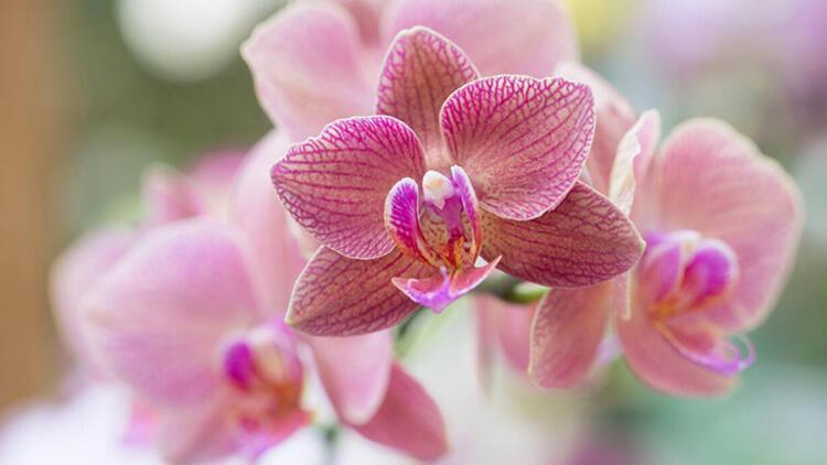 3. Orkide