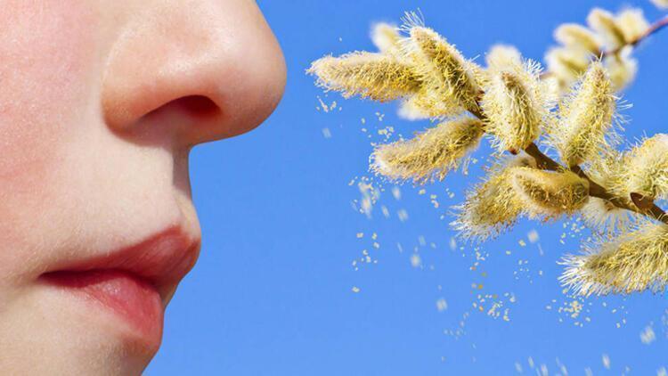 Üzüm otu tehdidi yaygınlaşıyor! Bu güçlü alerjen... - Sağlık Haberleri