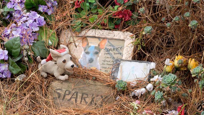 Evcil hayvanını kaybedenler bu acıları yaşıyor: Gömecek bir yerleri bile yok