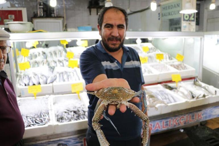 Onikişubat ilçesi Şazibey Balık Pazarı'nda esnaflık yapan İbrahim Sarı, Mersin'den yengeç getirerek satışa sundu.
