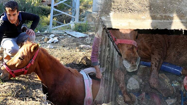 Su kanalına düşen at kurtarıldı