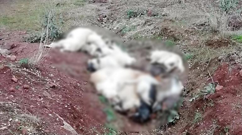 Arazide üst üste atılmış köpek ölüleri bulundu