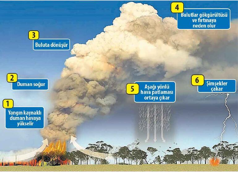 Tarihin en büyük ekolojik felaketi