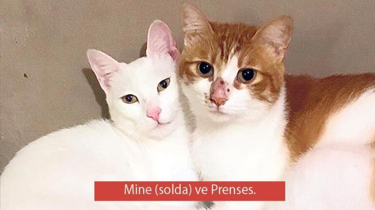Birine sevginin talep edilmeyeceğini anlatmak istiyorsanız ona kedi hediye edin