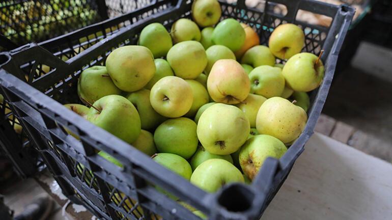 Elma ticaretinde Habur hareketliliği