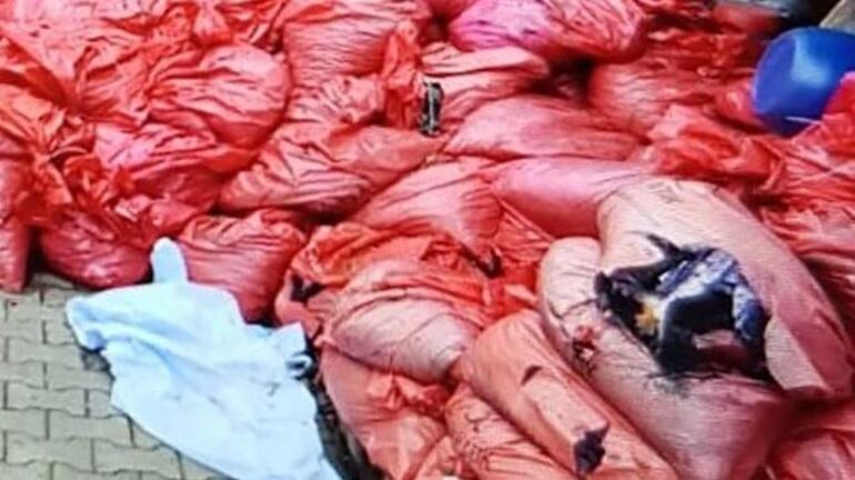 Sinop'taki yangın faciasında flaş gelişme 302 çuval külden kemik parçası çıkmadı