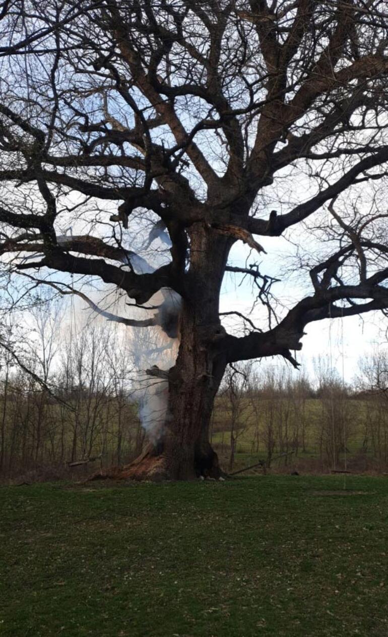 400 yıllık tarihi çınar ağacını yaktılar