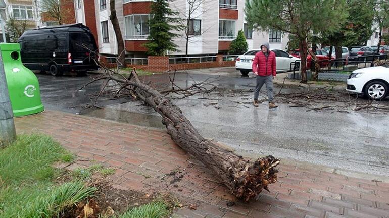 Şiddetli rüzgar kenti vurdu Ağaçlar devrildi...