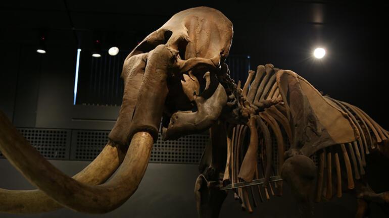 Mamutlar hakkında bilgiler; Ne zaman yaşadılar, ne zaman yok oldular