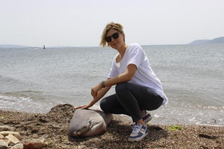Çanakkale'de 2 metrelik köpek balığı sahile vurdu