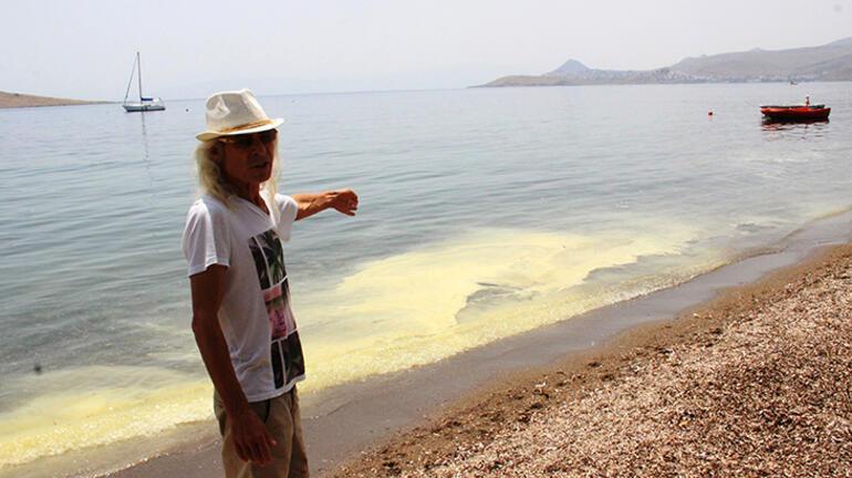 Bodrum'da sarı deniz paniği