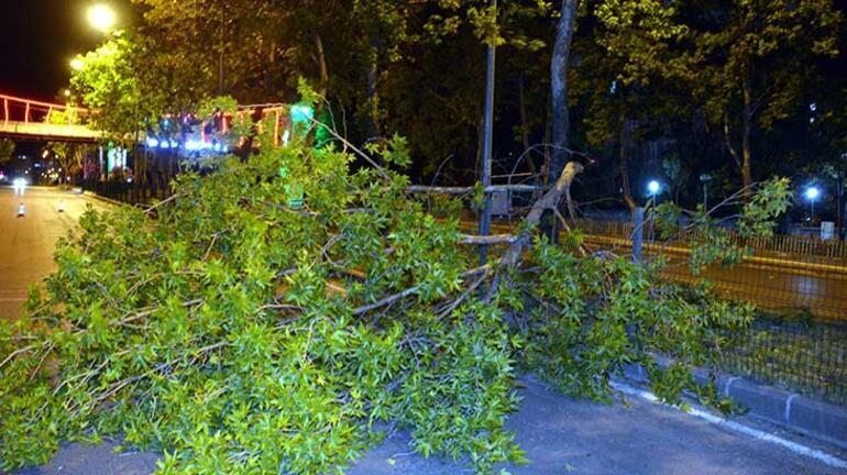 Kahramanmaraşta fırtına Çatılar uçtu, ağaçlar devrildi