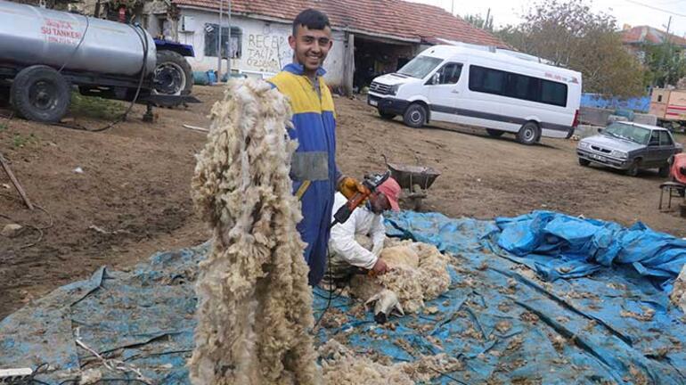 Besicilerin koyun kırkma telaşı başladı