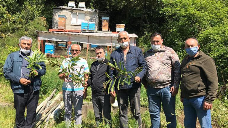 Yalova ve Bursadan sonra katil arı Zonguldakta da görüldü