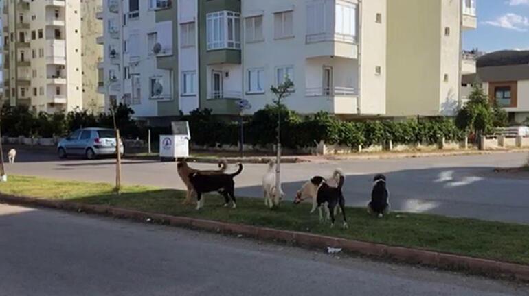 Antalyada oteller bölgesinde korku Kapıyı açınca bir anda etrafını sardılar