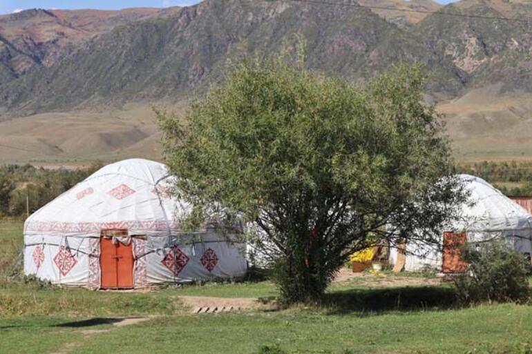 """Kazakistan'da Bir """"Batık Orman"""""""