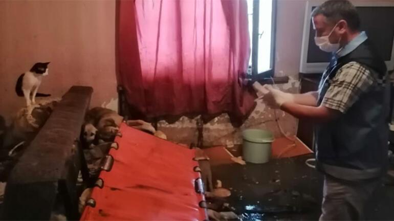 Ne ikna edebildiler ne de evden çıkarabildiler 21 kedisi için ağladı...