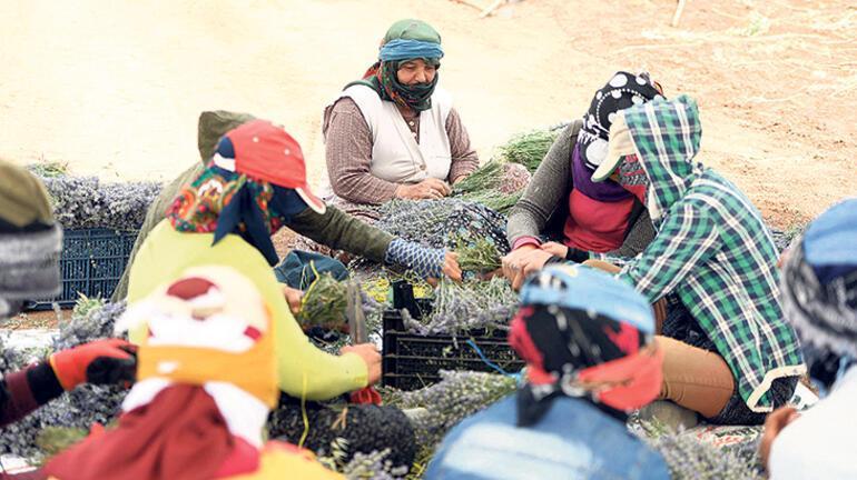 Kovid-19 mülteci işçileri de zorluyor