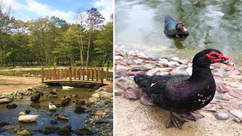 Avrupa'nın En Büyük Doğal Yaşam Alanı: ORMANYA