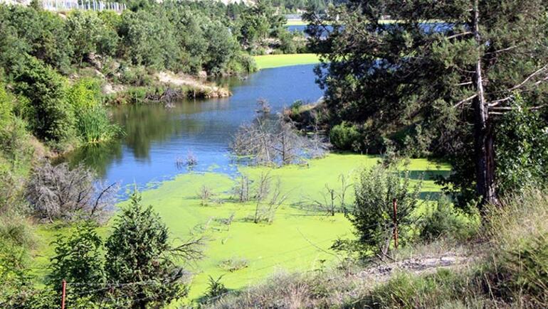 Alg patlaması, göleti yeşile bürüdü