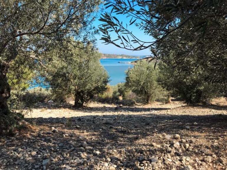 Dikili Bademli Koylarını Keşfet