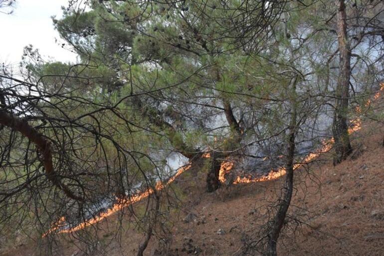 Sinopta iki ilçede korkutan orman yangını