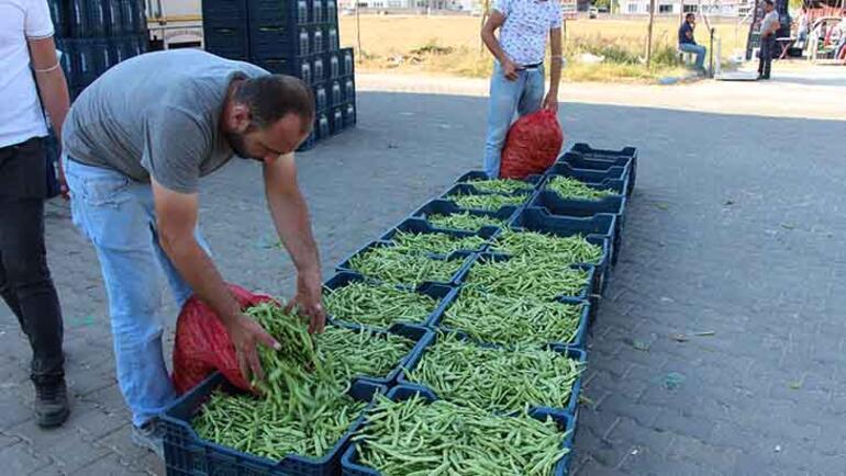 Tescilli ürün boncuk fasulyede hasat başladı