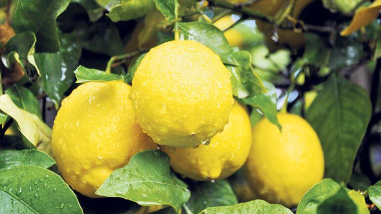 Mevsimsel ve yerel beslen
