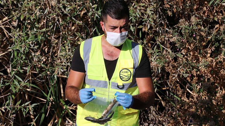 Ankarada içme suyunu besleyen çaya kimyasal atık döküldü iddiası