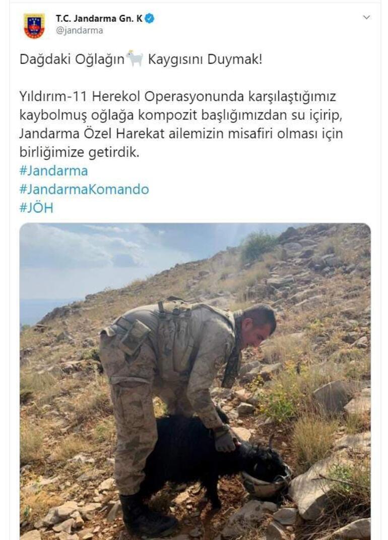 Susuz kalan oğlağın imdadına Mehmetçik koştu