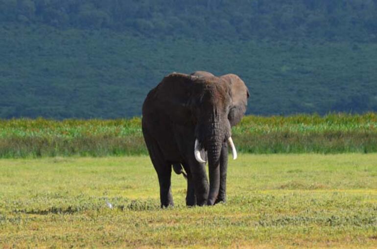 Büyük Beşlinin İzinde : SERENGETİ - NGORONGORO- TANZANYA