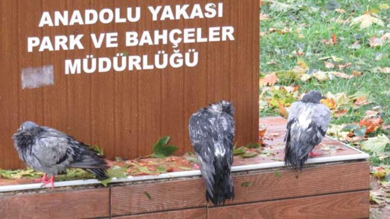Kadıköyde dolu kuşları öldürdü